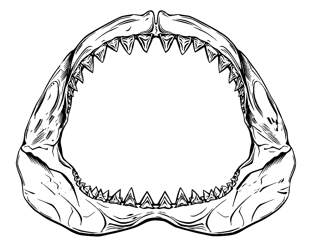 Vector sharks shark jaws. Png transparent images pluspng