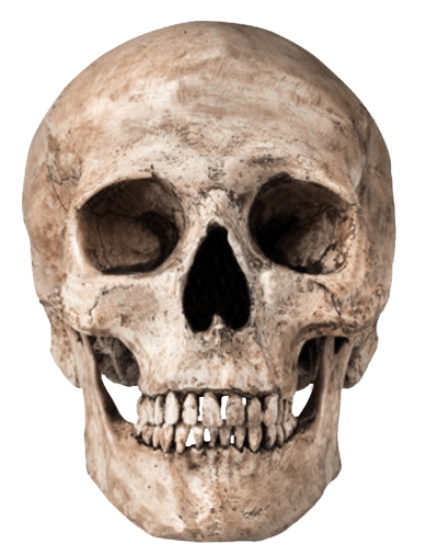 Vector skeleton anthropology. Millions of png images