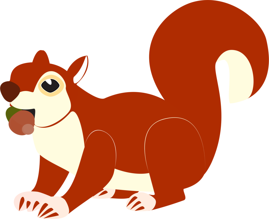 Vector squirrel cute. The white red eastern