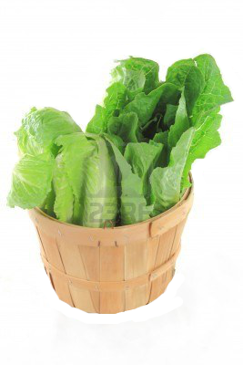 Vector vegetables lettuce. Pin by isabelle c