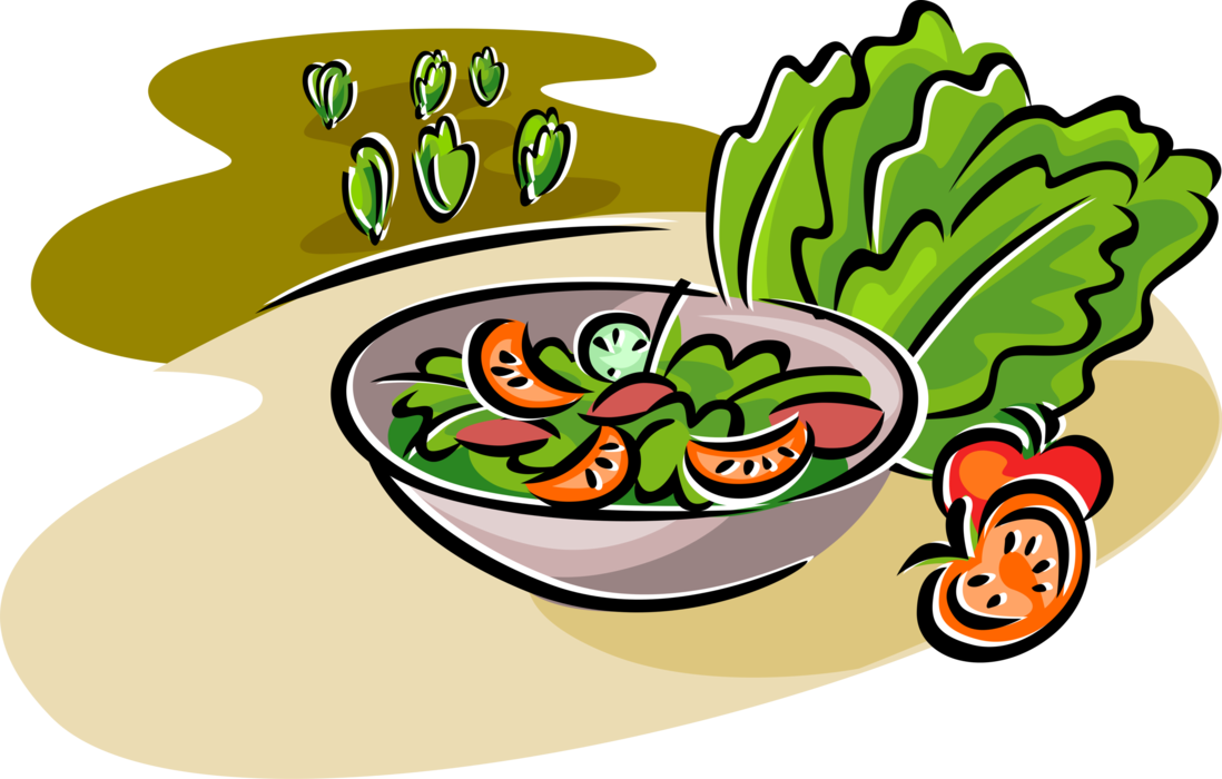 Vector vegetables lettuce. Salad with romaine and