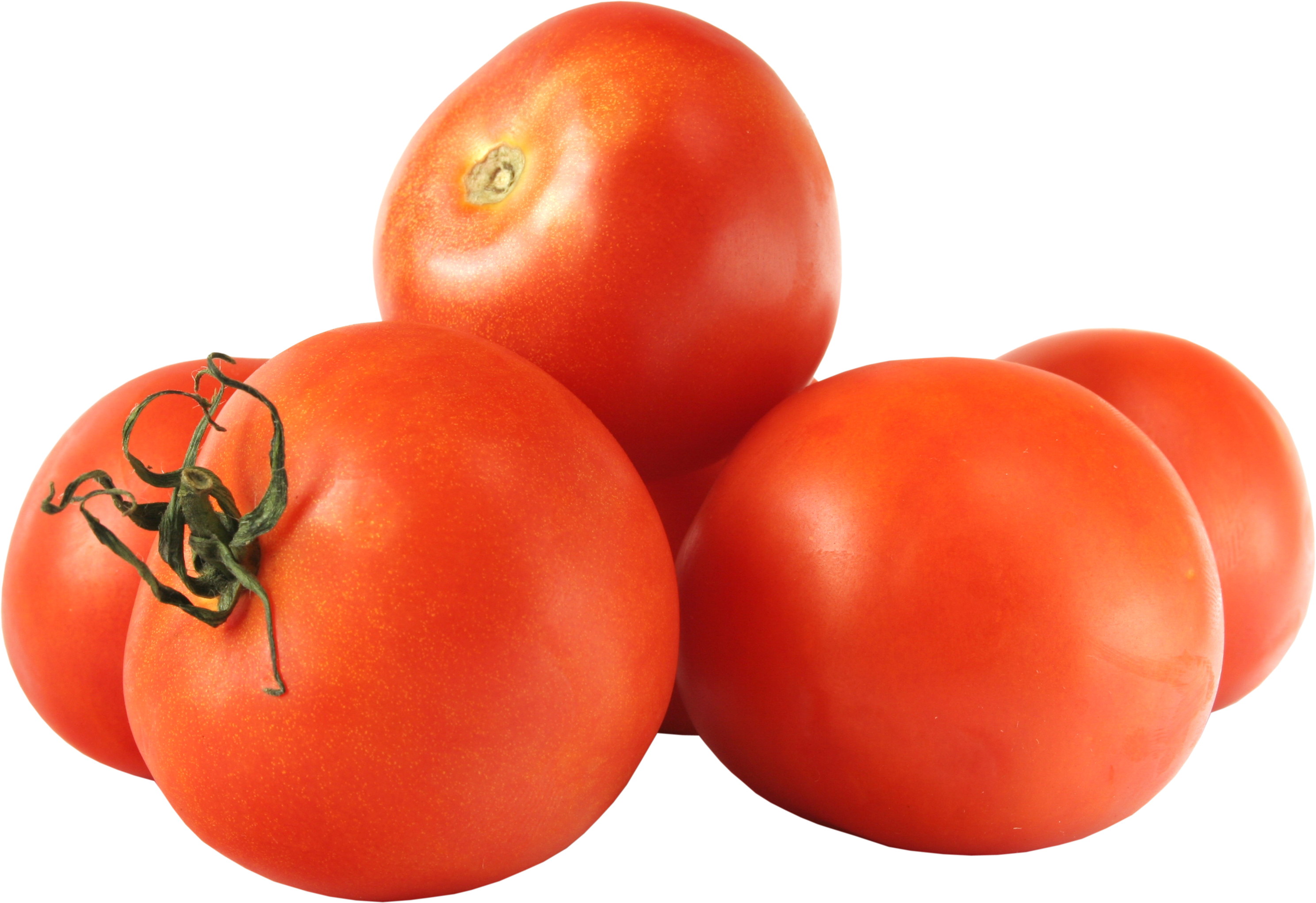 Vector vegetables tomato. Png images free download