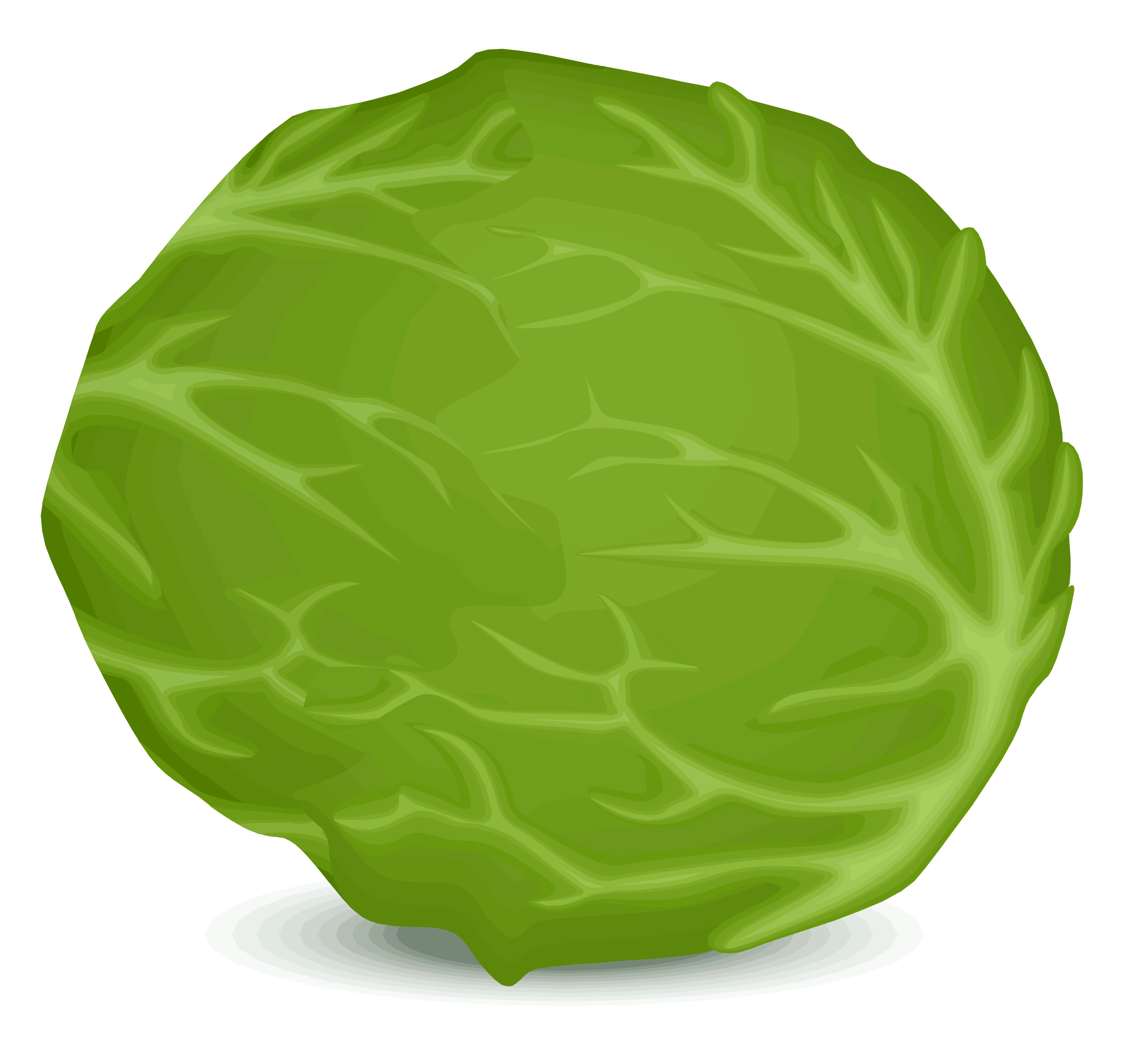Vector vegetables veggy. Collection of free cabbaging