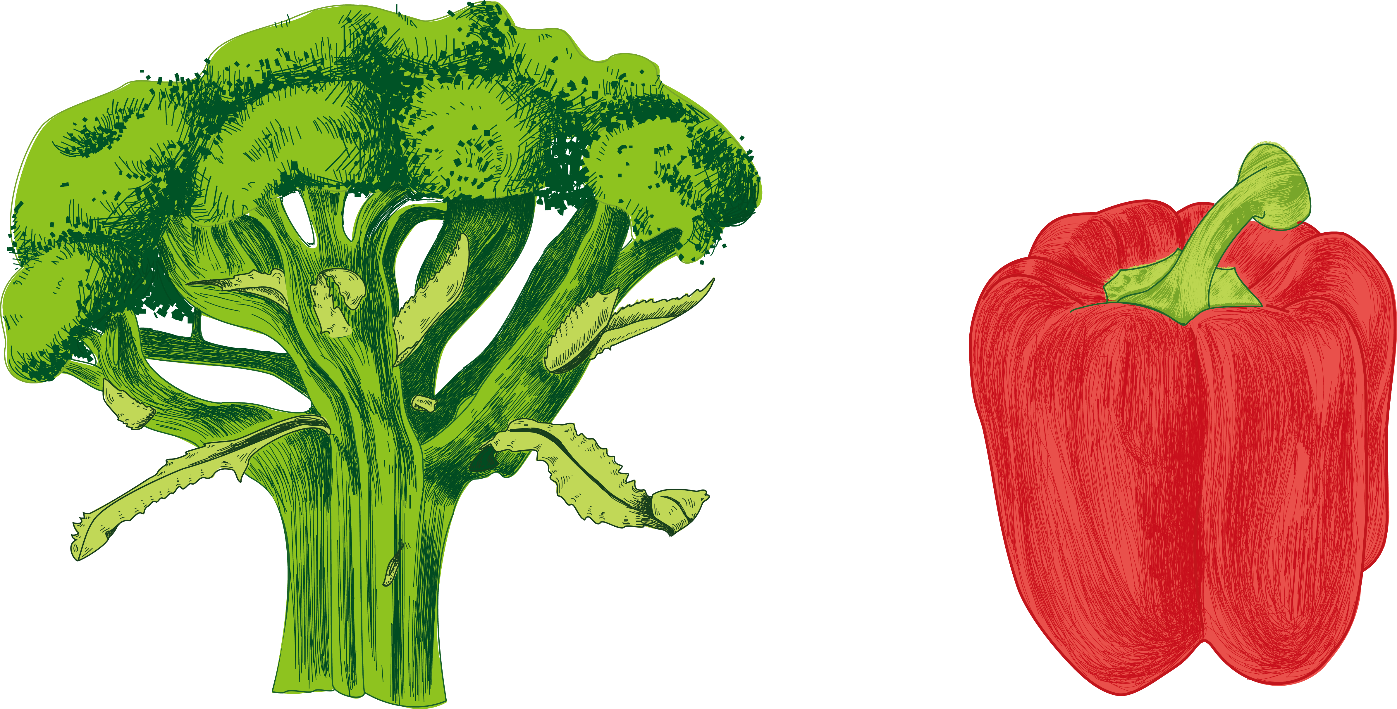 Vector vegetables watercolor. Chili pepper bell cayenne