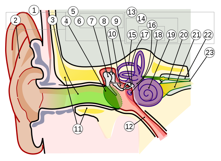 Vector viewer nti. File anatomy of the
