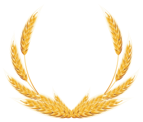 Vector wheat banner. Pin by m atiqu