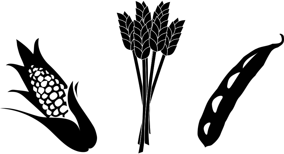 Vector wheat black and white. Innovating the community through