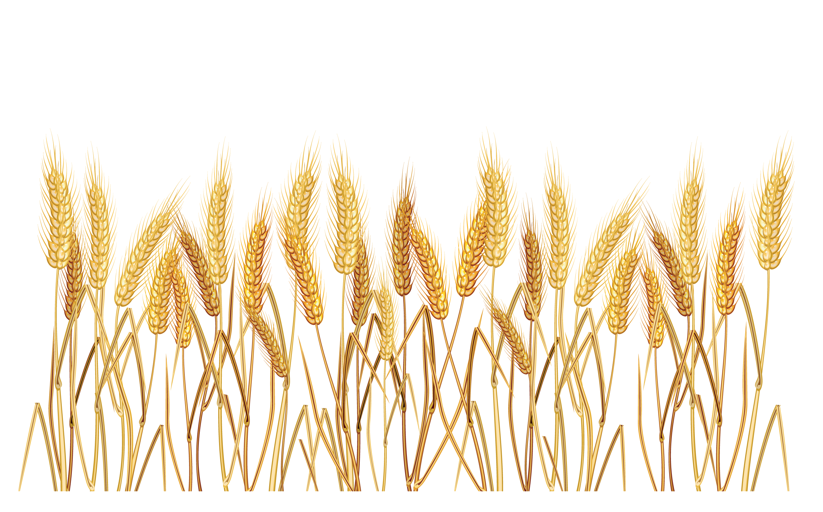 Vector wheat border. Cereal clip art peoplepng