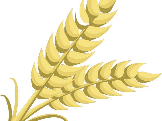 Vector wheat curved. Stalk image free