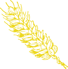 Vector wheat file. Gold clip art at