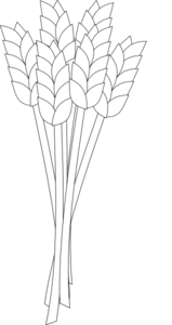 Vector wheat outline. Black and white clip