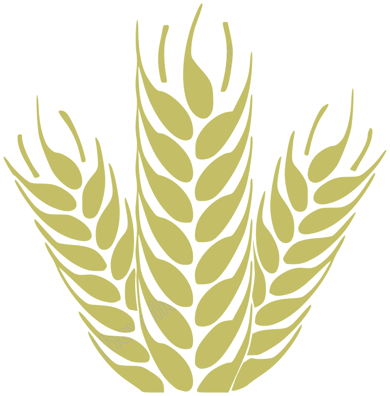 Vector wheat simple. Trego free download
