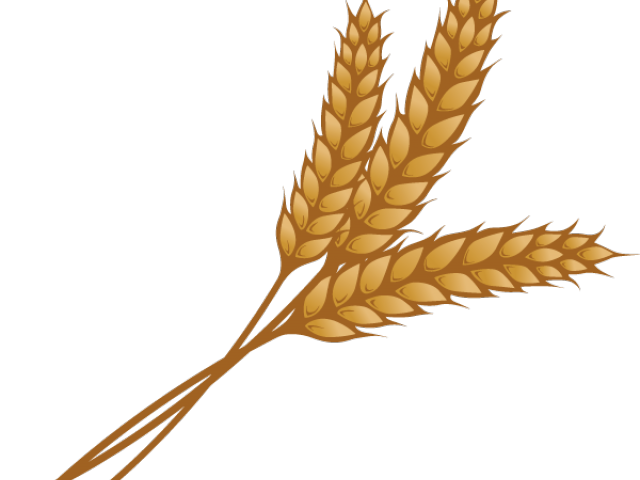 Vector wheat single. Grain clip art