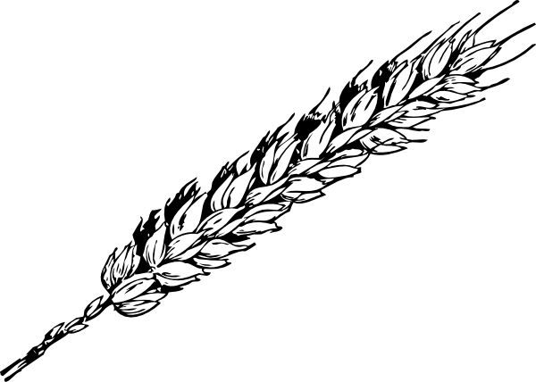 Vector wheat stalk. Collection of free grained
