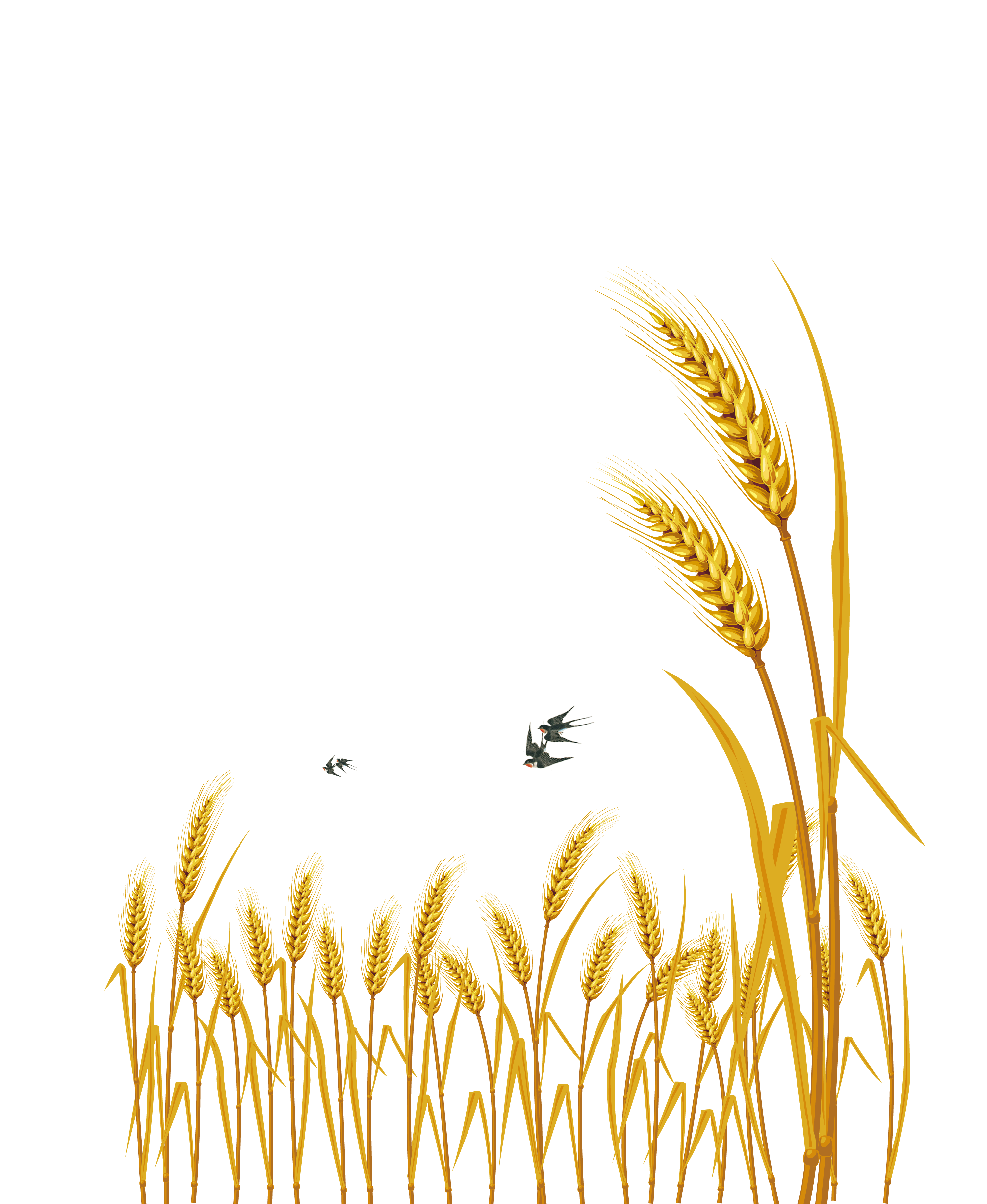 Vector wheat watercolor. Hand painted cartoon delicate