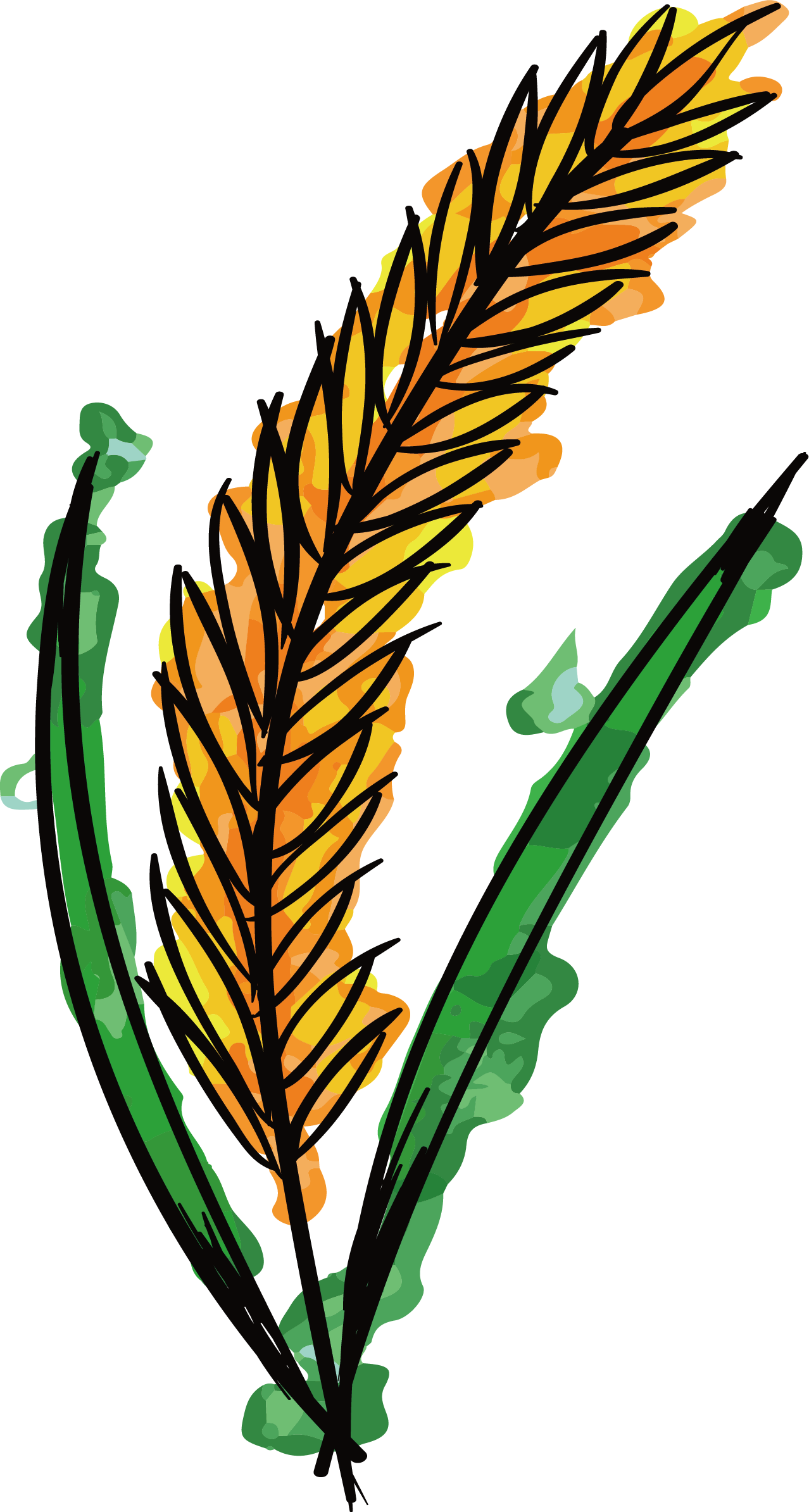 Vector wheat watercolor. Painting clip art hand