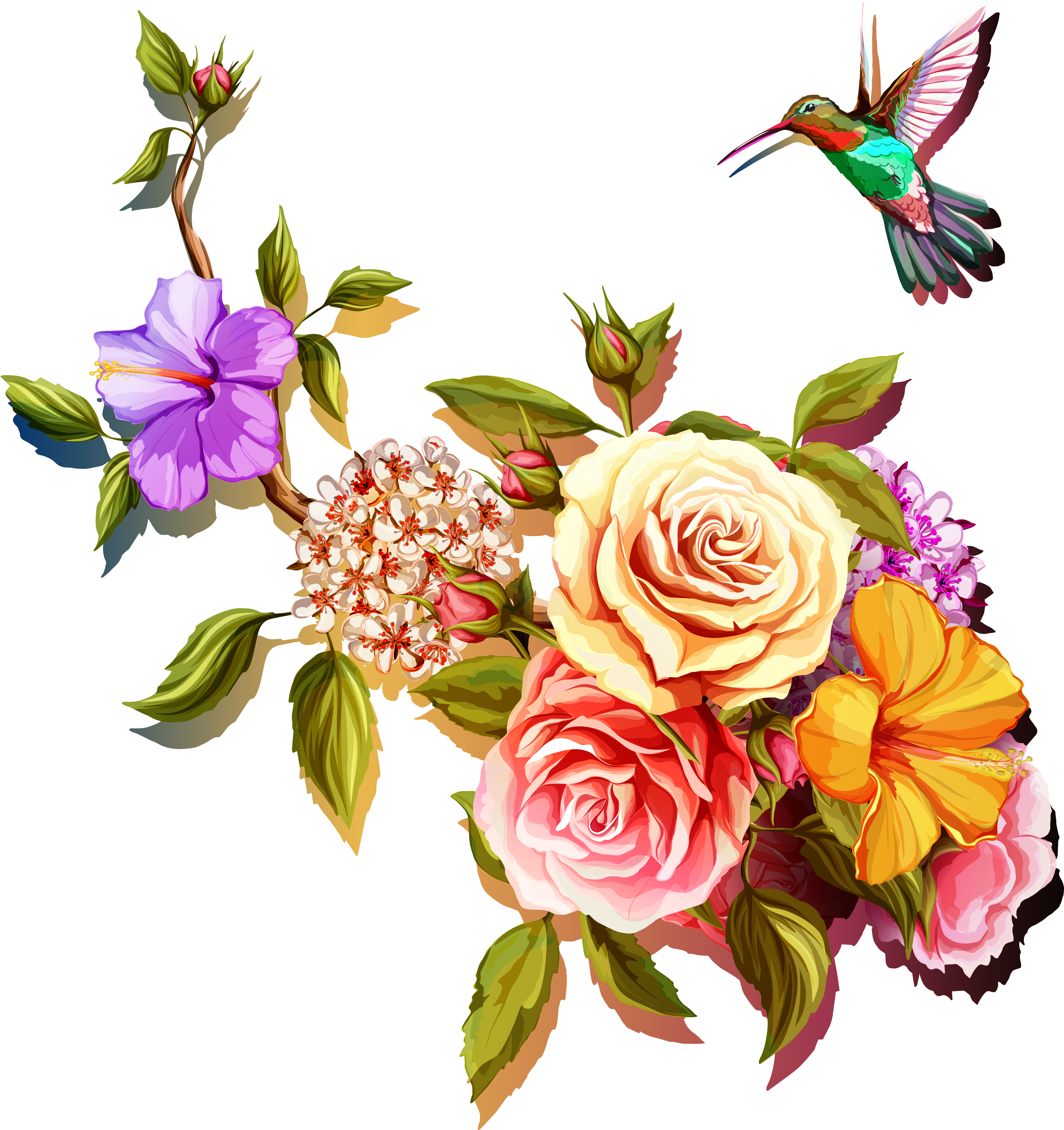 Vector wind painted. Chinese rose transprent png