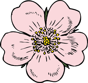 Vectorial drawing rose. Clip art at getdrawings