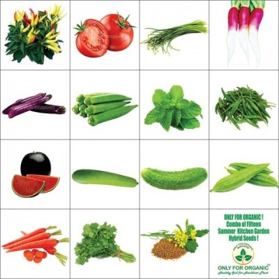 Combo of summer seeds. Vegetable clipart vegetable seed jpg black and white