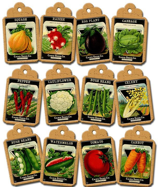 Vegetable clipart vegetable seed. Packet packets lime garden