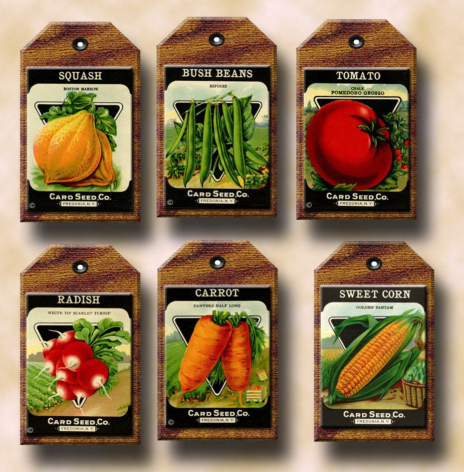 Vegetable clipart vegetable seed. Packets primitive vintage art
