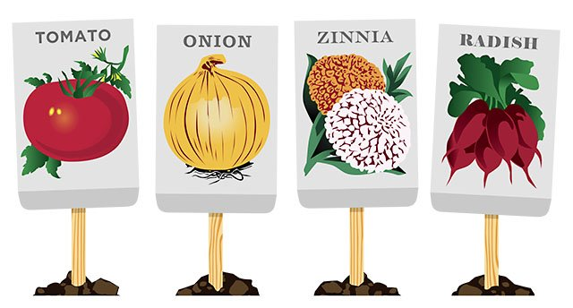 Successful seeds isthmus madison. Vegetable clipart vegetable seed clipart black and white stock