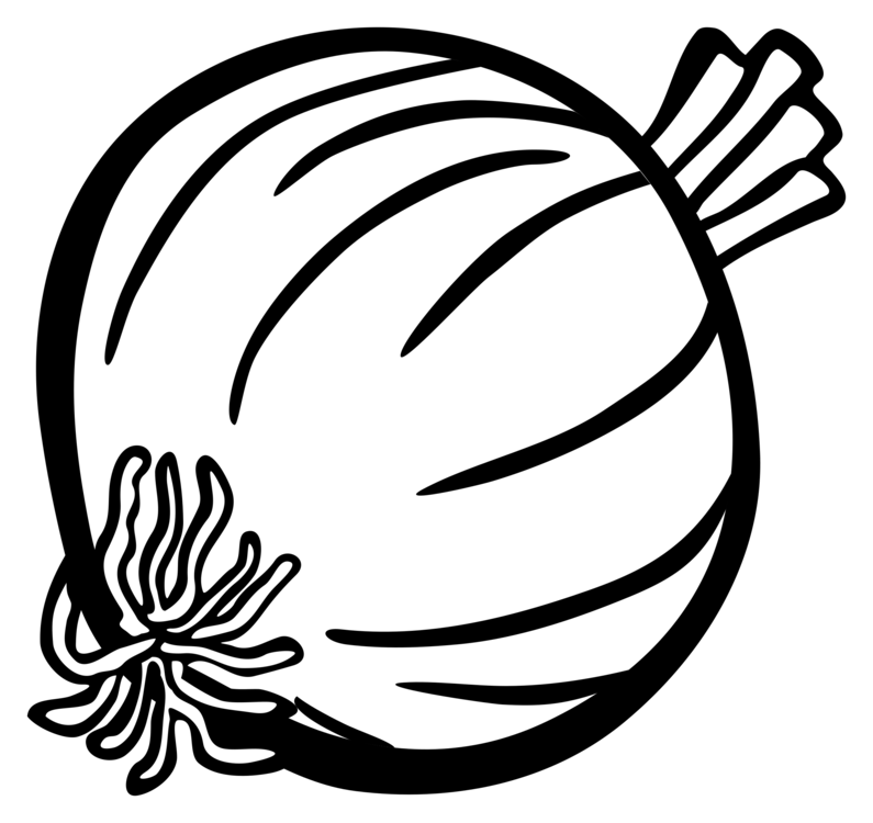 Drawing vegetable. White onion computer icons