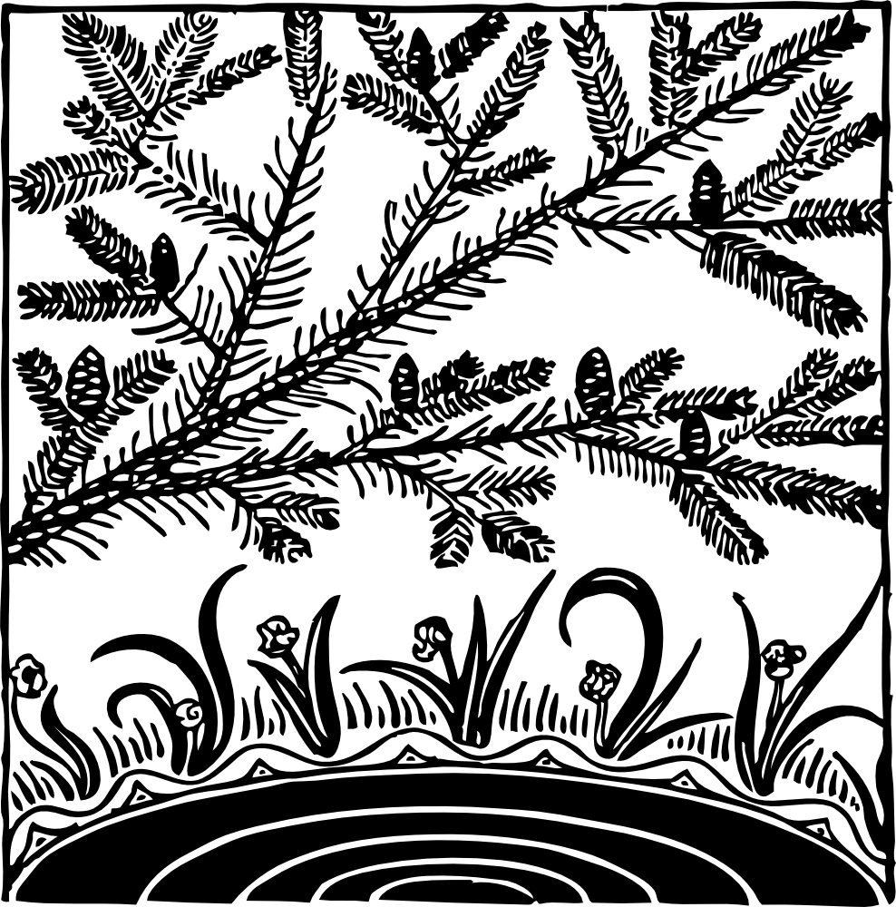 Vegetation drawing pond plant. Onlinelabels clip art pine