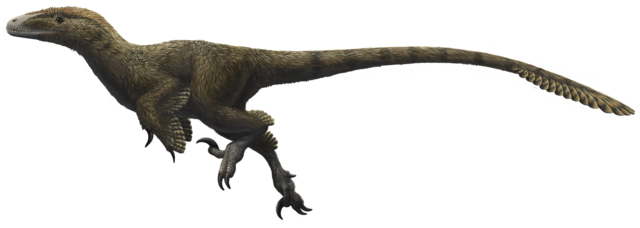 Velociraptor arm png. Dinosaur wiki fandom powered