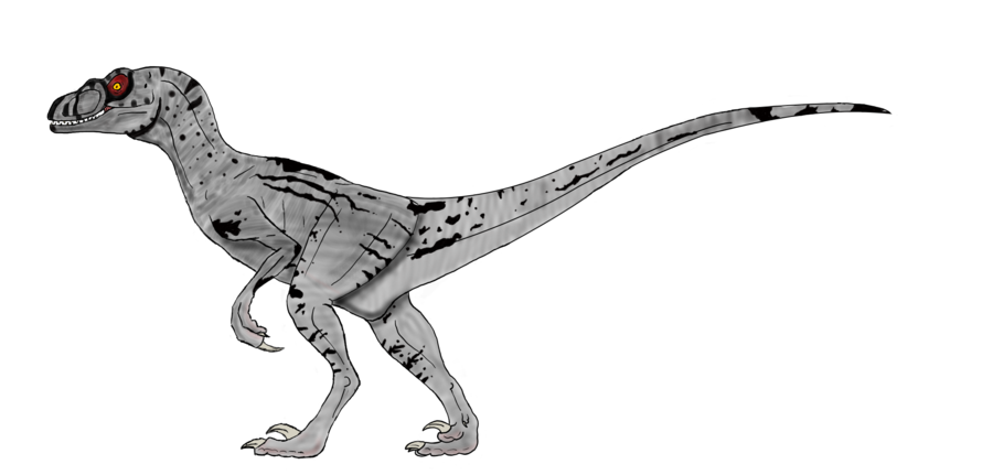 Velociraptor transparent black and white. Sornaensis female by brooksleibee