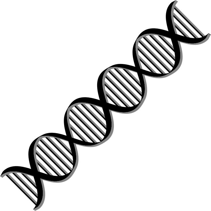 Vertical vector dna strand. Collection of free helices