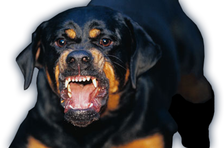 Vicious dogs png. Fears by katelyn king