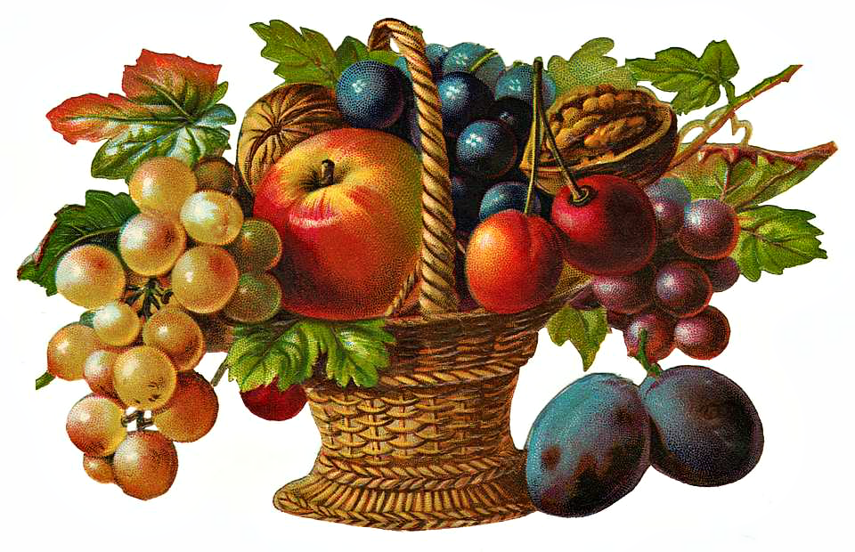 Victorian clipart fruit. Basket gy m lcs