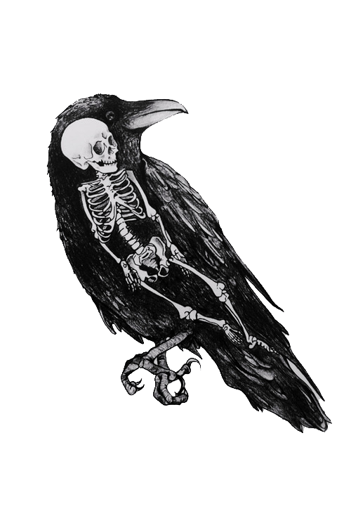 The crow wondered how. Gothic vector bird skull vector royalty free stock