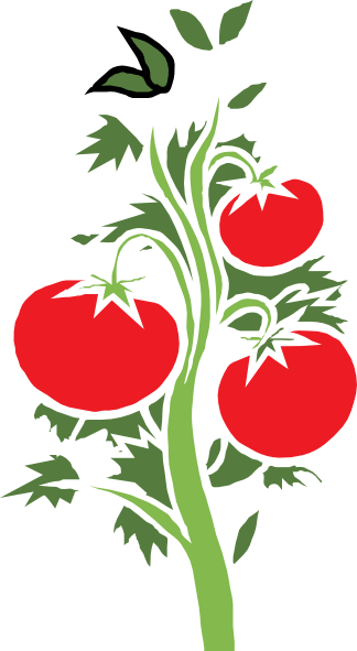 Tomato plant png