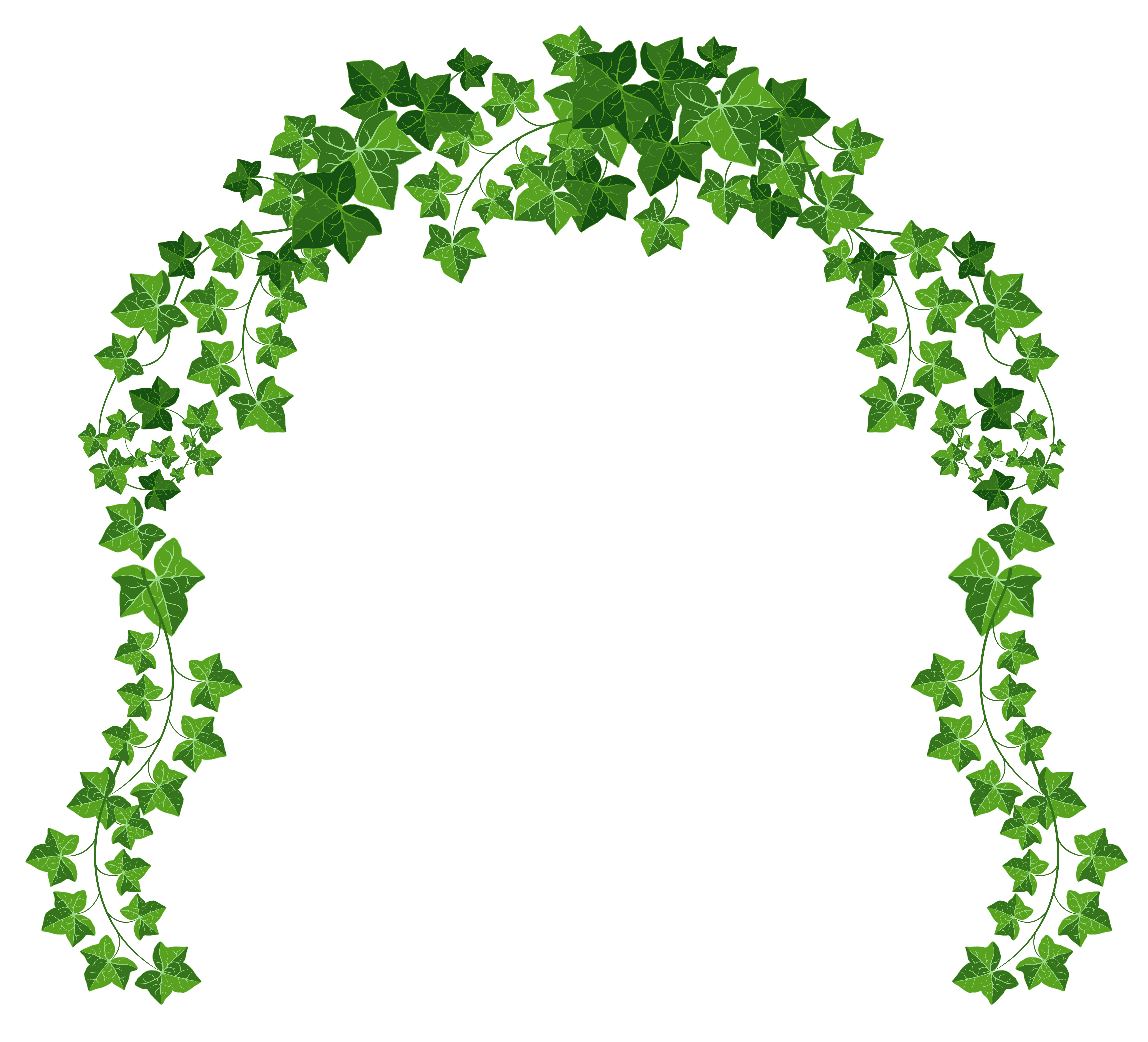 Vine png. Arch clipart picture gallery