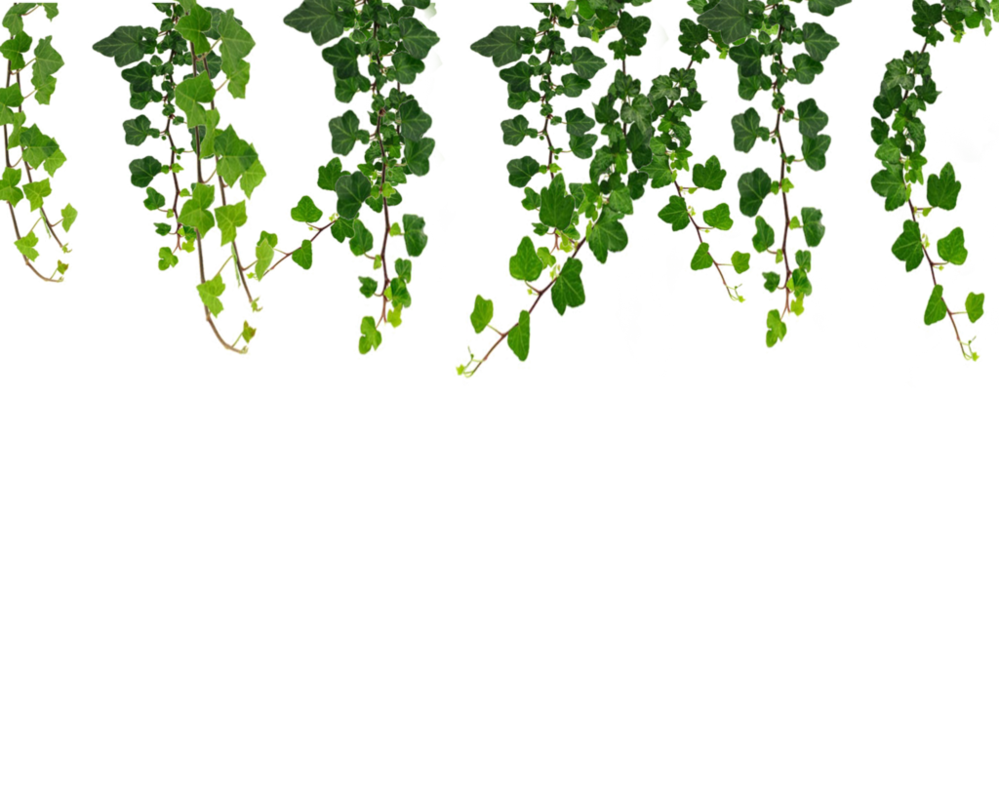 Vine doodle png. Hanging vines by moonglowlilly