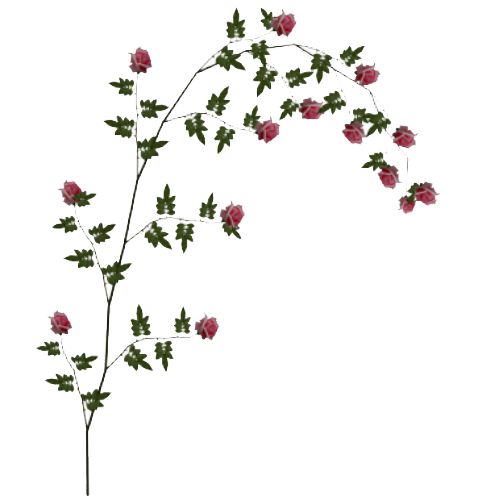 Vine flower png. Rose hd transparent images