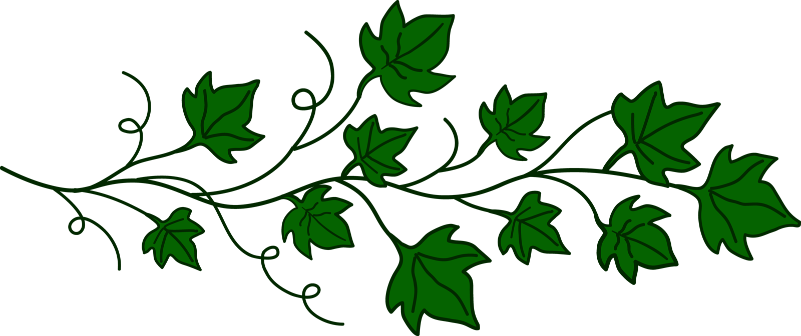 Vines clipart. Transparent png pictures free