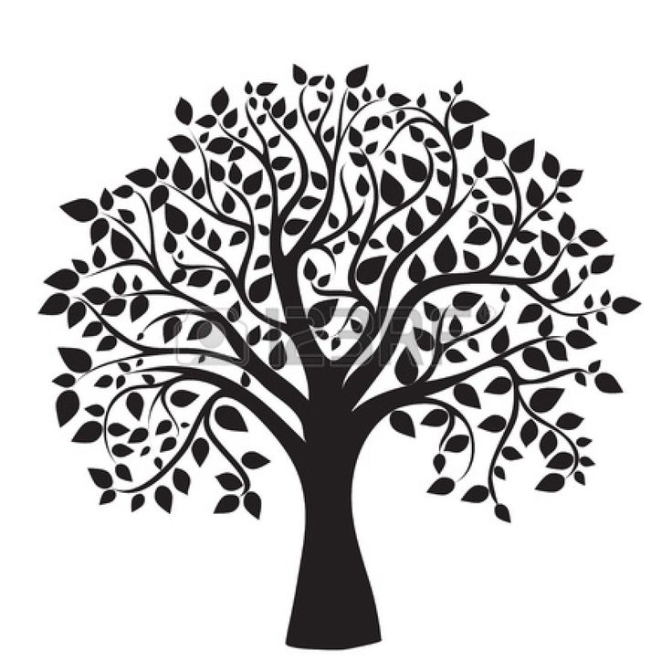 Vines clipart family tree. Best free search