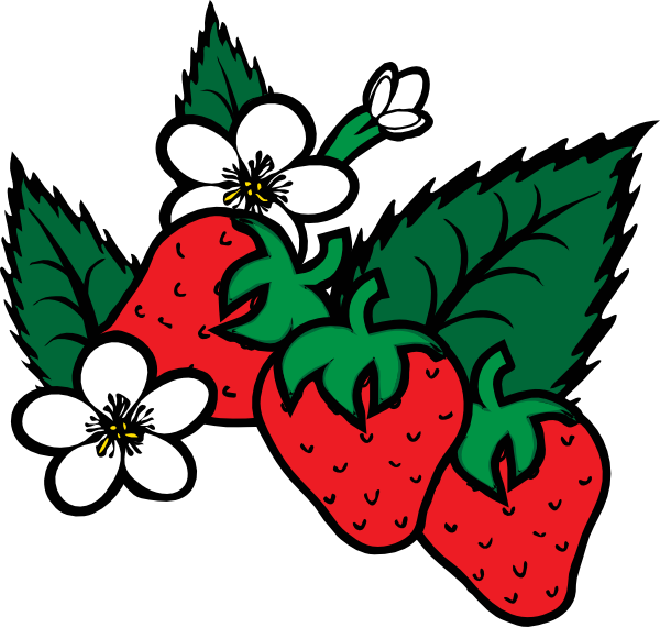 Plant clipart fruit plant. Strawberry vine drawing at