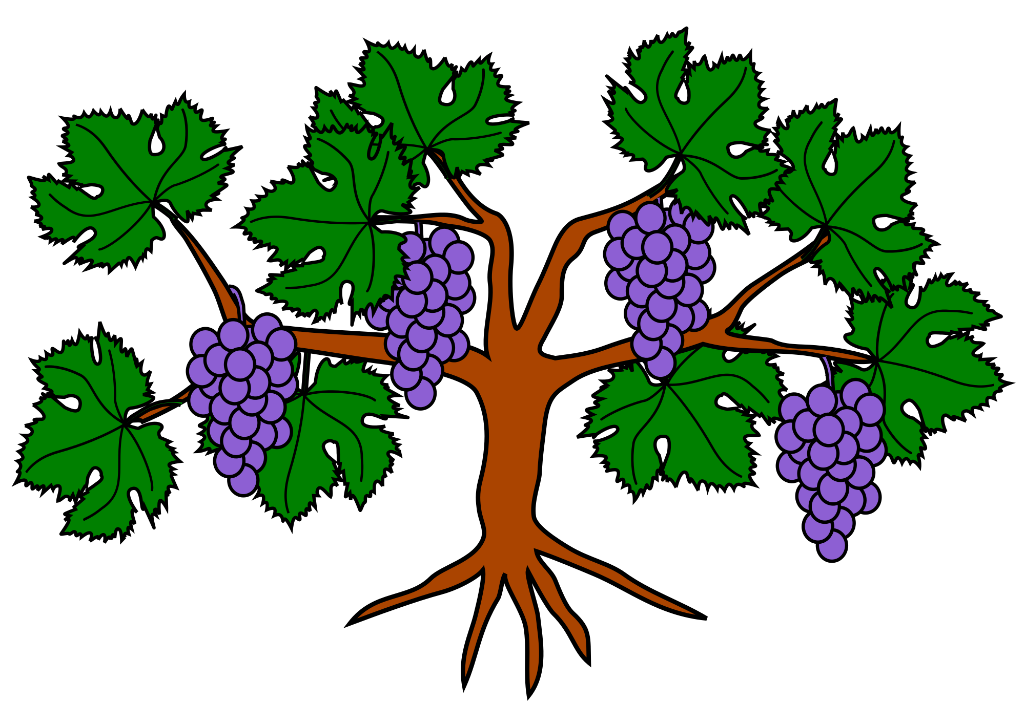 File grapevine wikimedia commons. Vines svg grape image royalty free download
