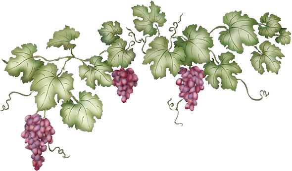 Grapevine pinterest. Grape vines png clipart library download