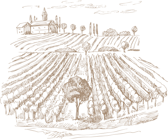 vineyard drawing