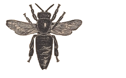 Vintage bee png. Honey clipart views downloads