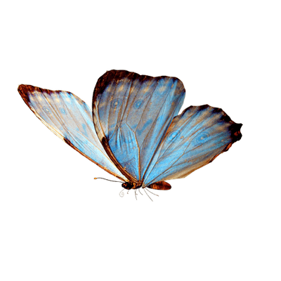 Butterflies png transparent. White vintage butterfly stickpng