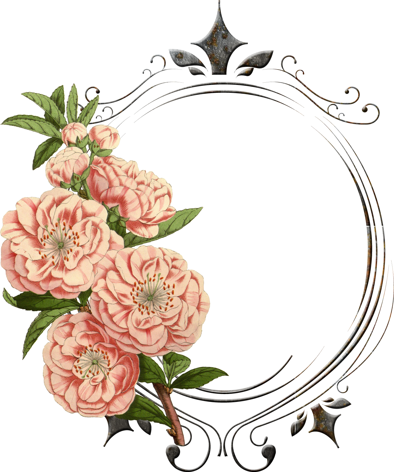 vintage flower graphic png