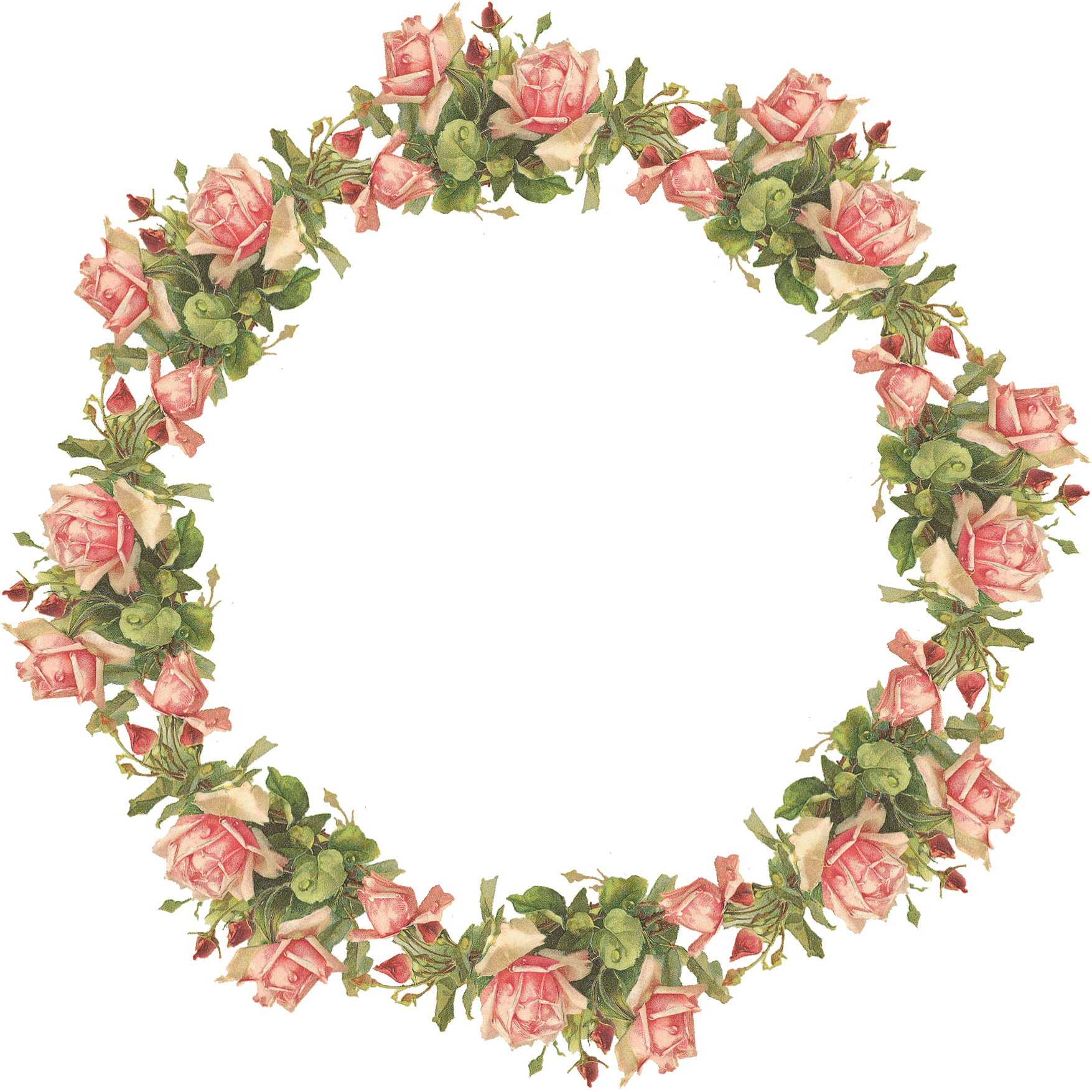 Catherine klein pink roses. Vintage flower frame png graphic library library