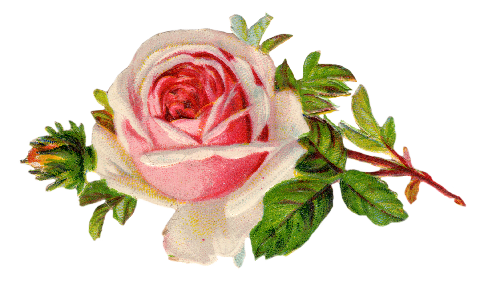 Free rose art pretty. Clip from vintage vector stock