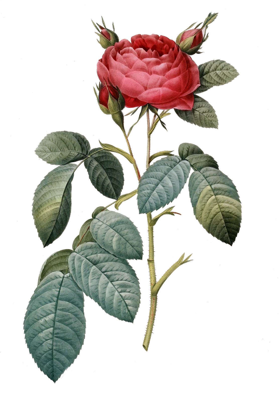 Clipart best for the. Vintage flower png free download